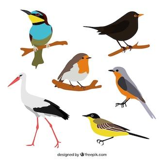 Raccolta di uccelli piatto Vettore gratuito