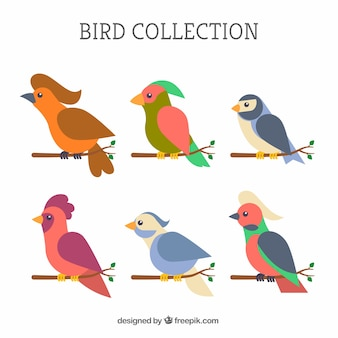 Flat bird collection
