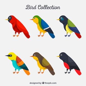 Collezione di uccelli piatti