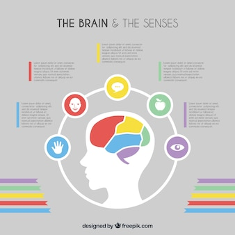 Flat brain infographic template with color details