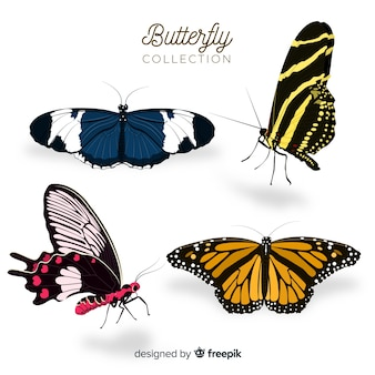 Flat butterfly collection