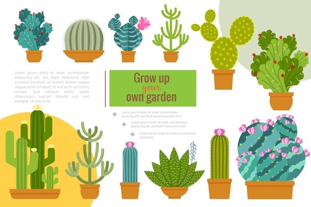 냄비 그림에서 성장하는 아름다운 즙이 많은 식물과 평면 선인장 집 정원 조성