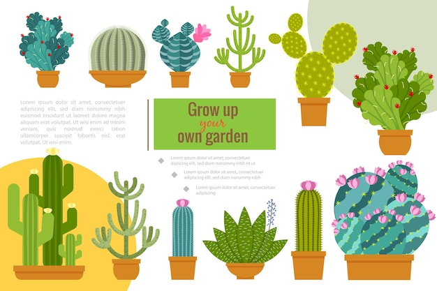 Flat cactuses home garden composition with beautiful succulent plants growing in pots illustration
