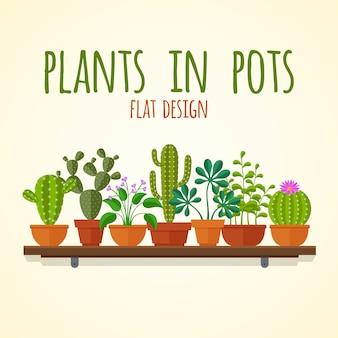 Flat cactuses and home plantas  concept. plant cactus in pot, nature interior flower illustration