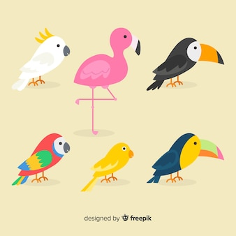 Flat cartoon exotic bird collection