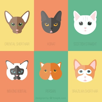 Flat cat breed avatar collection