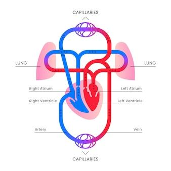 フラット循環システムのインフォグラフィック