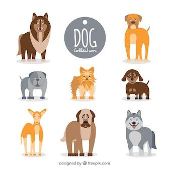 Плоский сбор собак разных пород