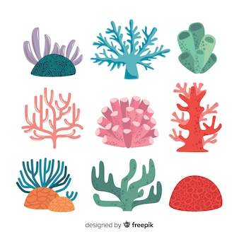 Flat coral collection