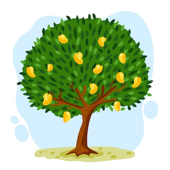 Flat design botanical mango tree with fruits