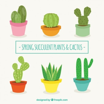 Flat design cactus collection Free Vector