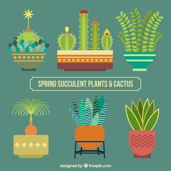 Flat design cactus collection