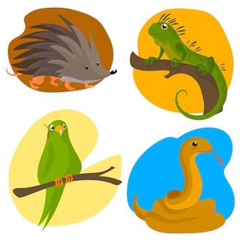 Плоский дизайн разные домашние животные иллюстрации набор