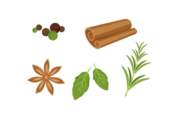 Collezione di erbe olio essenziale design piatto