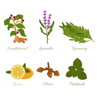 Flat design essential oil herb collection