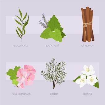 Flat design essential oil herb pack