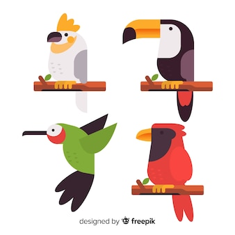 Flat design exotic birds collection