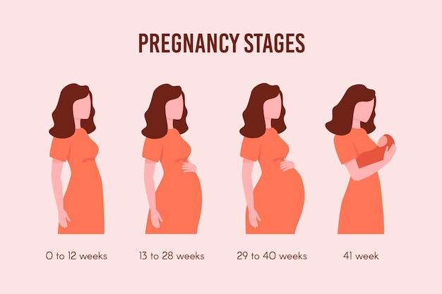 Flat design pregnancy stages pack