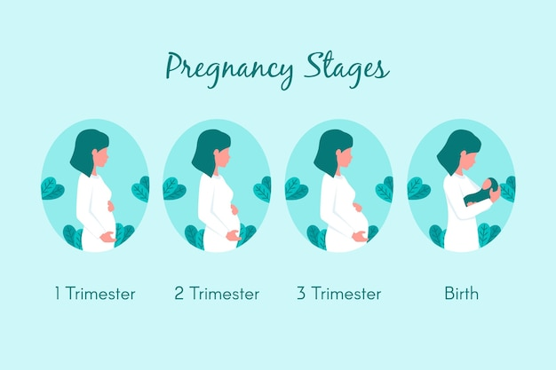 Flat design pregnancy stages set