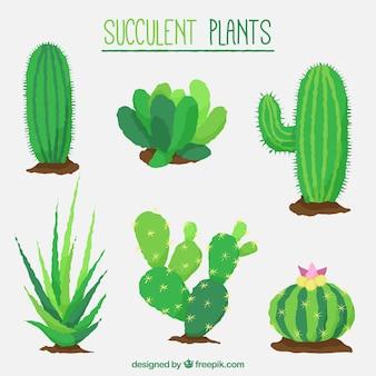 Flat design succulent cactus