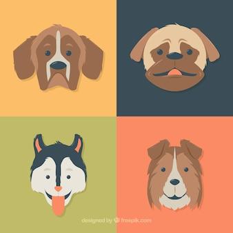 Плоские собаки разных пород
