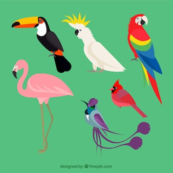Flat exotic bird collection