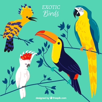Flat exotic birds collection