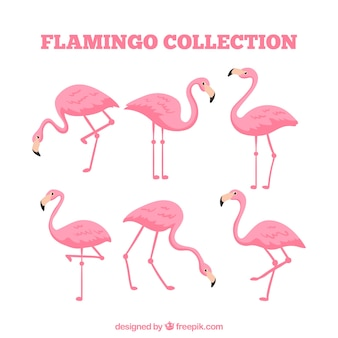 Flat flamingos collection in different poses