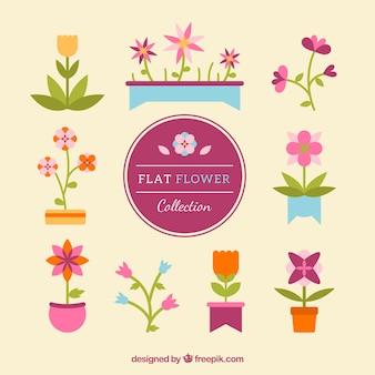 Плоские цветы в теплых тонах