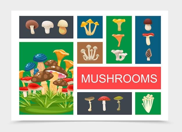 Композиция плоских лесных грибов