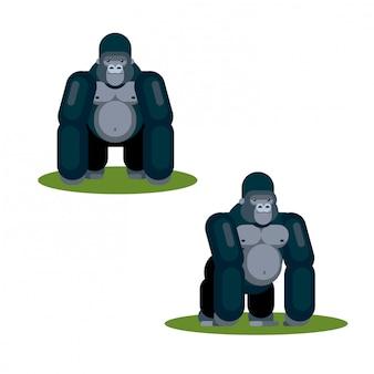 Flat gorilla