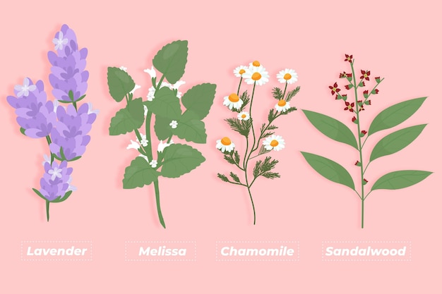 Flat-hand draw essential oil herb pack