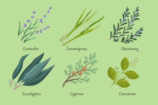 Flat-hand draw essential oil herb set