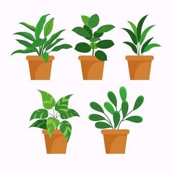 플랫 관엽 식물 컬렉션