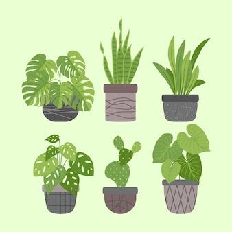 Collezione di piante d'appartamento piatte