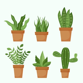 Flat houseplant collection