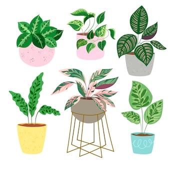 Flat houseplant in pots set