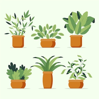Flat houseplants illustrated collection