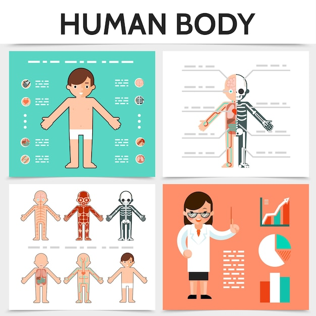 Flat human anatomy square concept with internal organs skeletal resperatory muscular circulatory nervous systems illustration