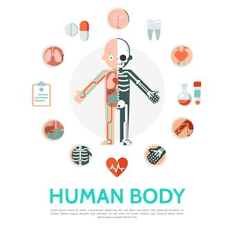 Flat human body anatomy round concept