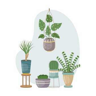 The flat illustration with house pants in pots. planting. decorative plants in the interior of the house. flat style.