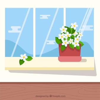 Плоские цветы жасмина в цветочном горшке