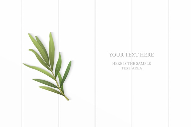 Flat lay top view elegant white composition tarragon leaf on wooden floor background.