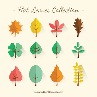 Flat leaves collection