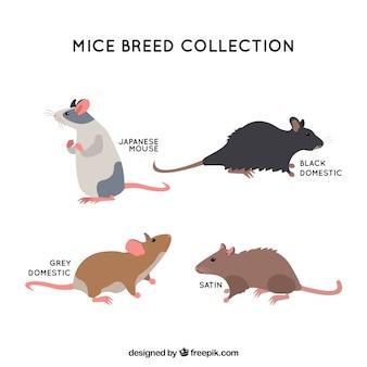 Flat mice breed set