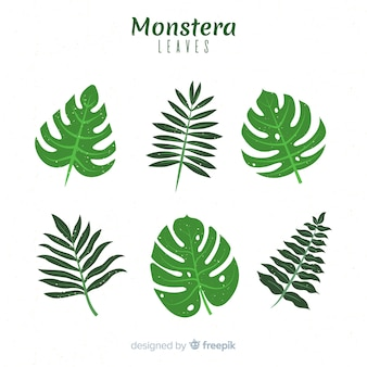 Flat monstera leaves set