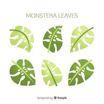 Flat monstera leaves