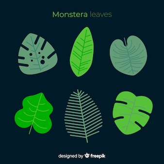 Flat monstera leaves