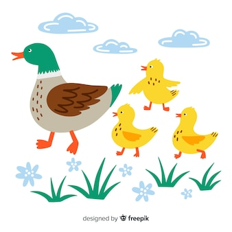 Flat mother duck and ducklings