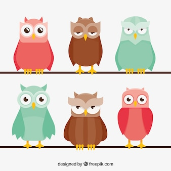 Flat owl collection